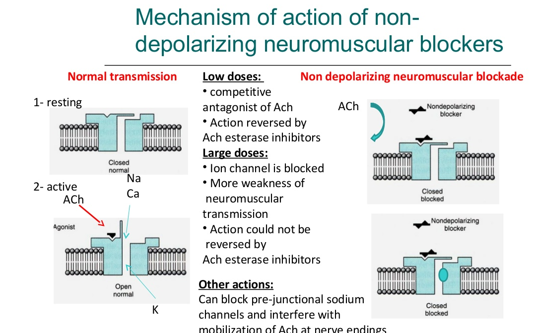 Skeletal muscle relaxant mechanism of Action 1