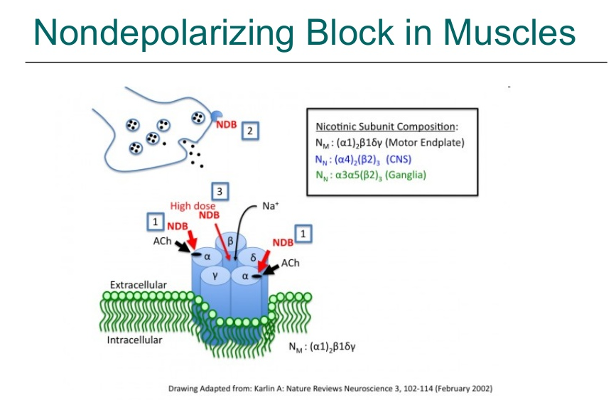 Skeletal muscle relaxant mechanism of Action PPT
