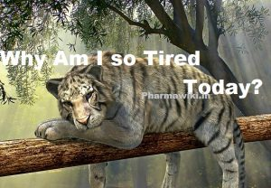 Why Am I so Tired? Today's Causes & Reasons of Fatigue || MEN WOMEN Tiredness